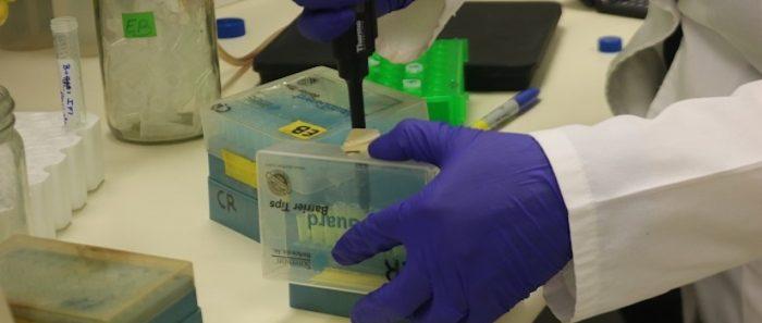 Investigadores esperan desarrollartest para medir infección por COVID-19 con gusano de un milímetro