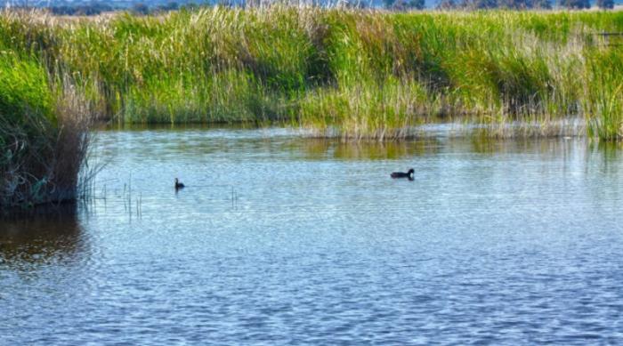 Humedales: reglamento de criterios para su conservación es fundamental para mitigar los efectos del cambio climático