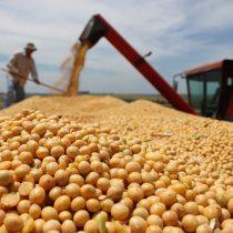 Escasez de legumbres: un problema de seguridad y soberanía alimentaria