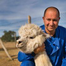 Investigadores chilenos que descubrieron en alpacas anticuerpo contra SARS-CoV-2 demuestran que puede neutralizar variantes sudafricana, británica y brasileña