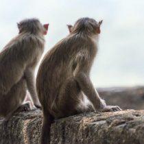 ¿Se pueden investigar vacunas contra Covid-19 en la época del animalismo?