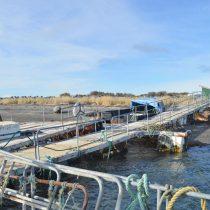 Magallanes: SMA formula cargos contra empresa Pesca Suribérica S.A. tras denuncia de Sernapesca por incumplimientos ambientales
