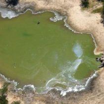 Muerte de elefantes en Botsuana: el misterio que rodea el deceso