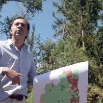 Estudio revela impactos negativos para el ambiente de subsidio a la forestación en Chile