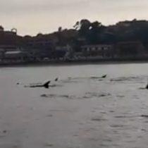 Delfines se asomaron por las costas de Quintero y pescadores se encargaron de registrar el momento