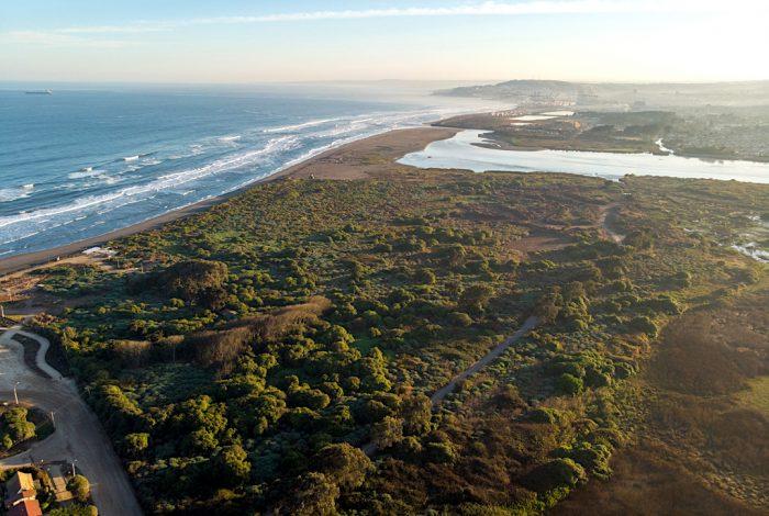 Humedal Río Maipo es reconocido oficialmente como Santuario de la Naturaleza
