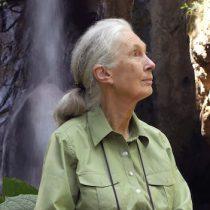 Jane Goodall: 60 años de la investigación científica sobre animales silvestres más larga de la historia