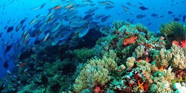 Científico insta a incorporar la biodiversidad al debate por una nueva Constitución