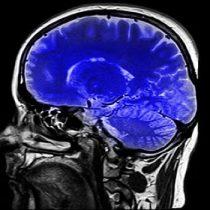 Revolucionarias investigaciones sobre eje cerebro-intestino y Covid-19 serán tema del próximo Puerto de Ideas EnVivo