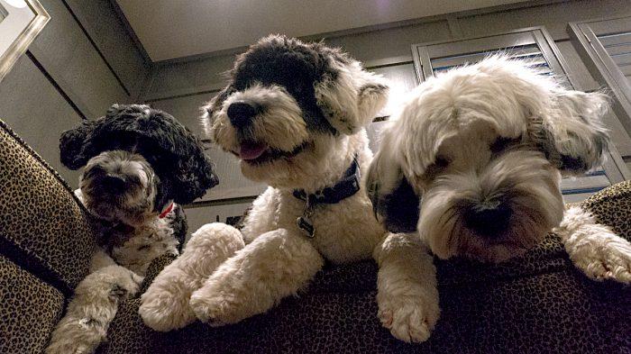 Día Mundial del Perro: los beneficios de tener una mascota y algunos cuidados para tener en cuenta