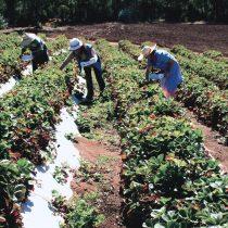 Cómo abordar la crisis del agua en una reactivación sostenible