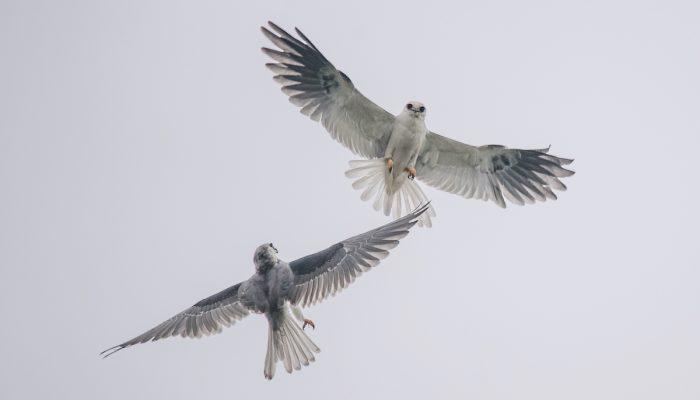 Aves de Chile contarán con Estrategia Nacional de Conservación