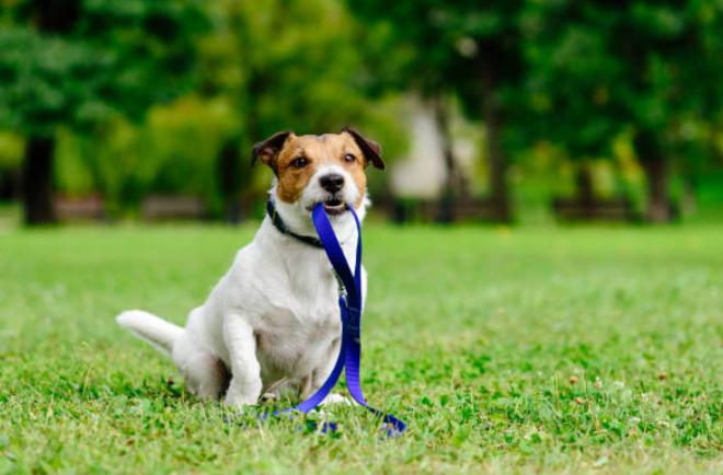 Dispositivo permite ubicar a tu mascota perdida usando un celular