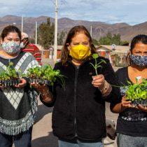 Proteger el Archipiélago de Humboldt para enfrentar el cambio climático
