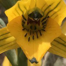 Inscripciones abiertas para taller gratuito sobre conservación y restauración de orquídeas chilenas vía online
