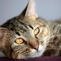 Mes de los gatos: los cuidados para una tenencia responsable