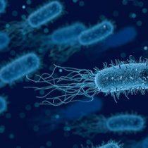 Bacterias sobreviven en el espacio exterior durante años