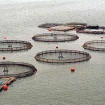 Expertos advierten urgencia de crear marco normativo que regule instalación de balsas-jaulas de salmones