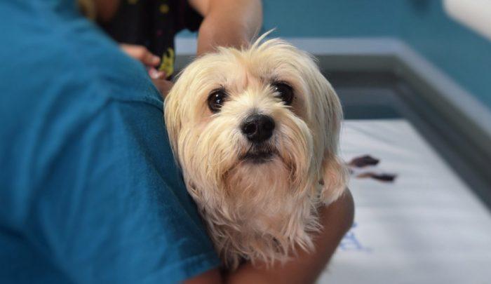Medicina veterinaria, salud pública y pandemia