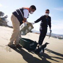 Labores de rescate y reinserción de fauna marina se mantienen durante la pandemia