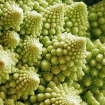 ¿Son las pandemias fenómenos fractales?
