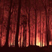 Advierten que incendios forestales de 2020 podrían ser peores que en 2019 en Sudamérica y el mundo