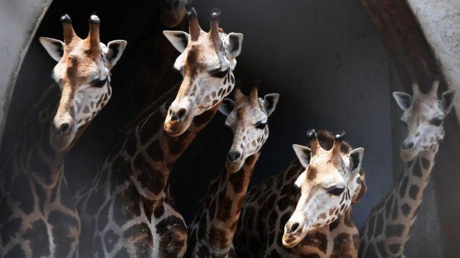 La sorprendente manera en la que los animales entienden los números (y qué ventajas les da para su supervivencia)