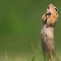 Comedy Wildlife Photography Awards: las divertidas imágenes nominadas a los premios