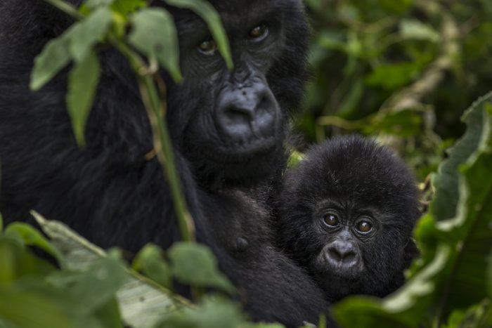 Informe alerta sobre pronunciado declive de biodiversidad en América Latina