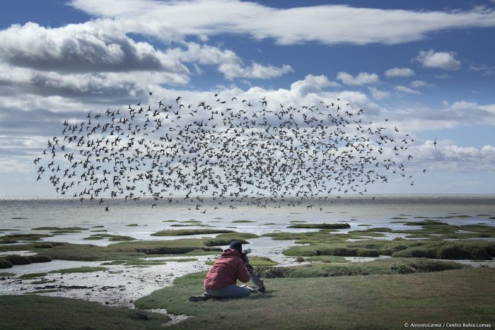 Se inicia implementación de Santuario de la Naturaleza en Bahía Lomas