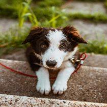 Día Mundial del Corazón: prevención tambien es fundamental en mascotas