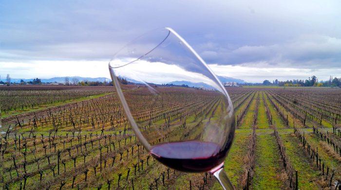 Día del Vino conmemora parte del orgullo nacional por sexto año consecutivo