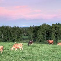 Comenzó programa de mantención de praderas y cultivos