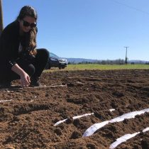 Estudian termotolerancia del trigo para mejorar los cultivos en un contexto de aumento de temperatura a consecuencia del cambio climático