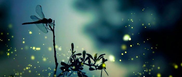Científicos de la U. de Chile utilizan proteína lumínica de luciérnagas para cuantificar anticuerpos neutralizantes del virus causante del COVID-19