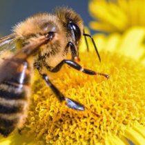 Día mundial de las abejas: agentes indispensables de la biodiversidad