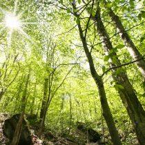 Servicio de Biodiversidad y Áreas Protegidas y el Sistema Nacional de Áreas Protegidas: ¡ahora!