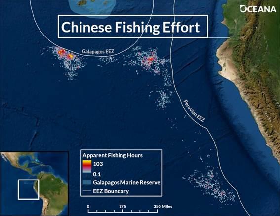 Experto de Oceana advierte el impacto que tendrá en la industria pesquera la flota clandestina de buques chinos que se acerca a aguas chilenas