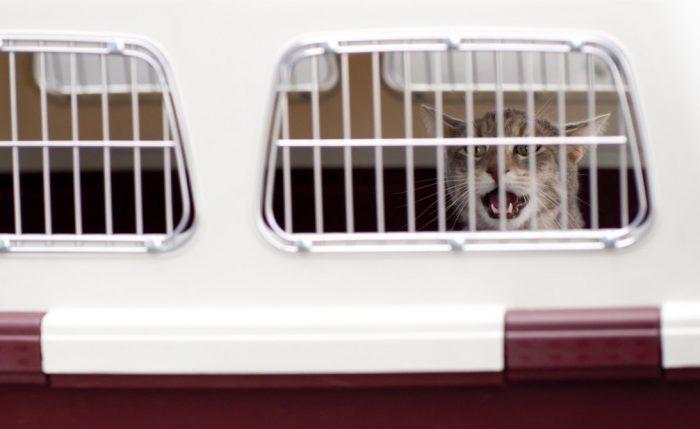 Transporte Pet Friendly: alternativas para viajar con tu mascota