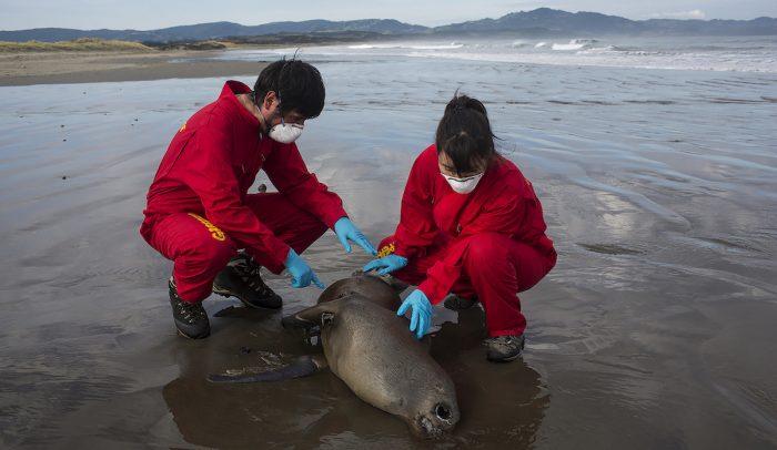 Día Nacional del Medioambiente: los problemas ambientales que visibilizó la pandemia