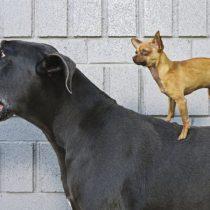 Los perros son nuestro