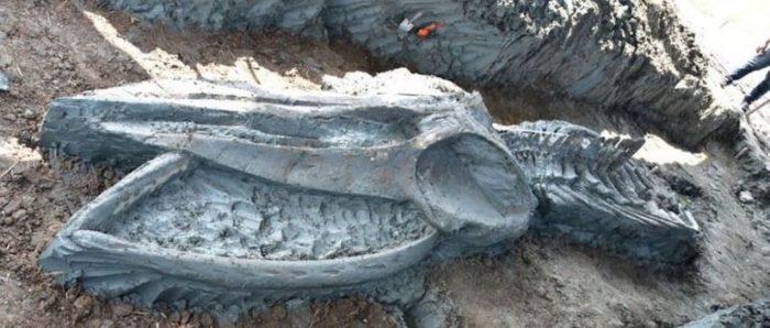 Hallan en Tailandia el esqueleto casi intacto de una ballena de hace al menos 3.000 años