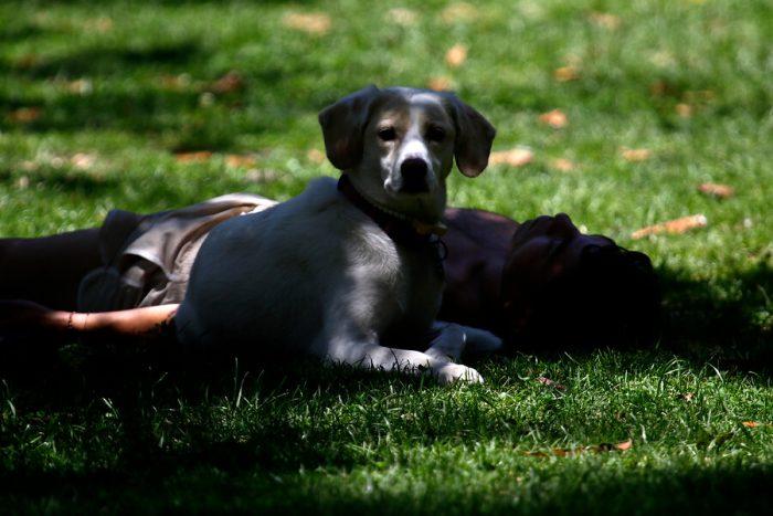 ¿Quién debe hacerse responsable por la muerte de perro en el Parque Quinta Normal?
