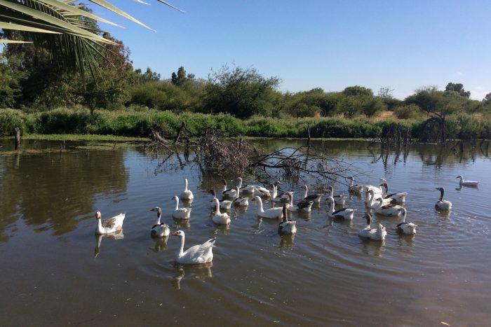 Humedales: ecosistemas que hay que conocer y preservar