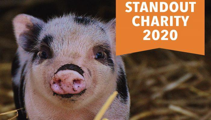 Premian a las mejores organizaciones animalistas del mundo
