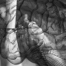 Neurociencias | Cocaína, dopamina y genes: cientificos investigan las claves del comportamiento adictivo