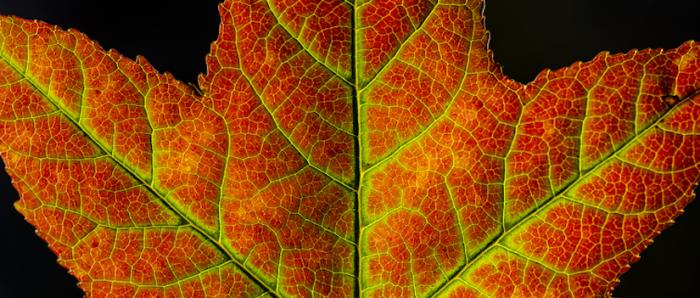 Pigmentos y fotones: la ciencia detrás de los colores otoñales del bosque