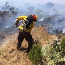 Pumanque: la resiliencia del territorio post-incendios y la innovación para recuperarse