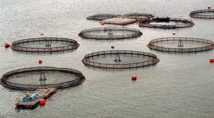El compromiso de la pesca en tiempos de crisis