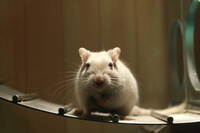 Be Cruelty Free: Ingresan proyecto de ley al Congreso que prohíbe el testeo de cosméticos en animales